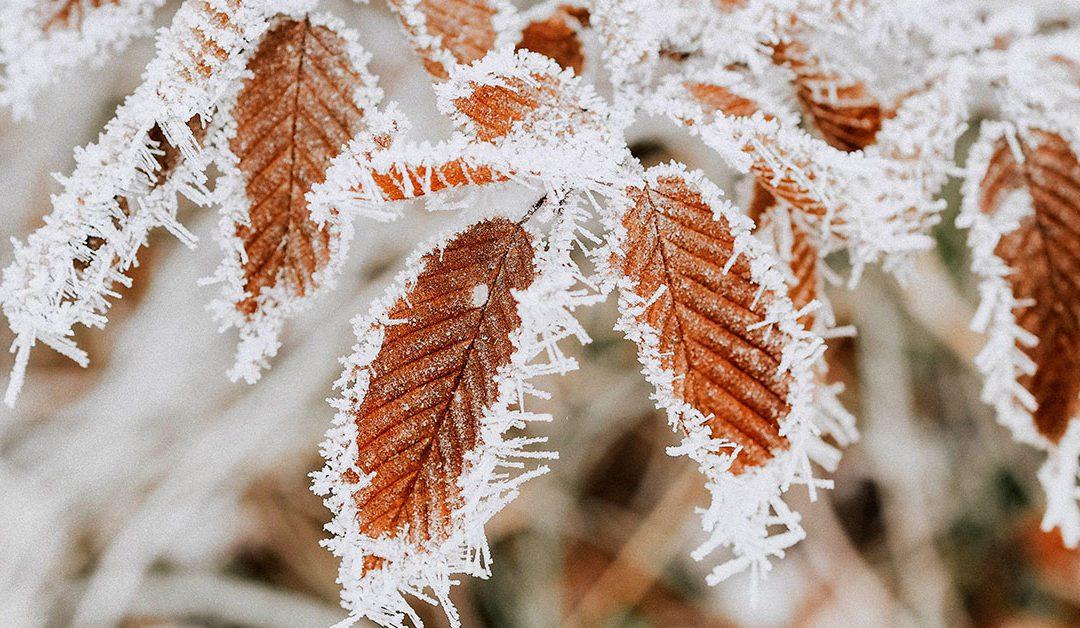Perdita dei capelli: come difendere i capelli dal freddo dell'inverno